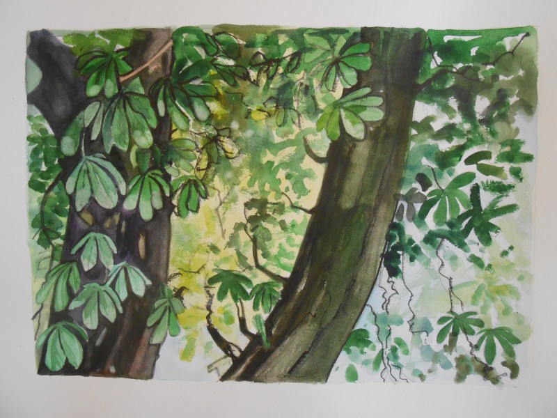 Chestnut tree 2